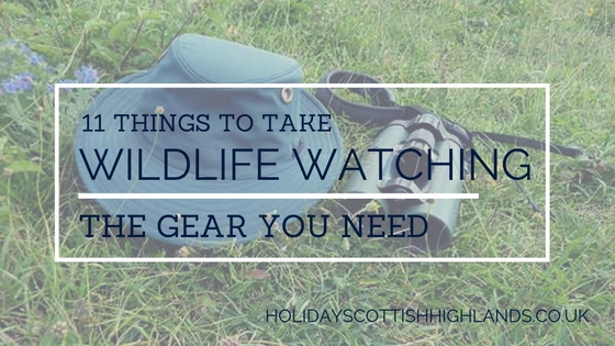 Blog - things to take wildlife watching
