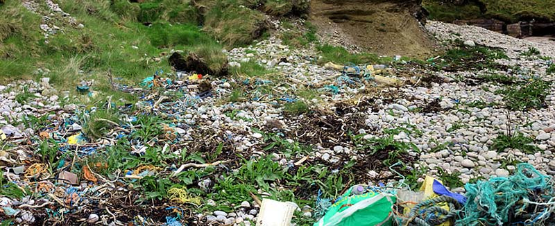 beach clean rubbish