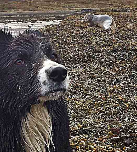 Things to do on the Isle of Skye -Blaze enjoys a spot of seal pup watching